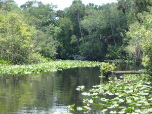 Bass habitat